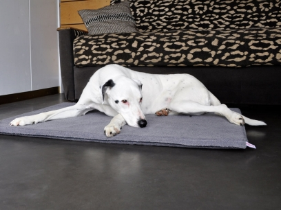 Orthopaedic Dog Beds in a Set-of-3