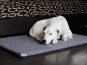 Orthopedic Dog Bed-1
