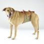 Dog diapers for large male dogs Set-of-6-2