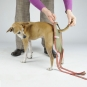 Dog diapers for small female dogs Set-of-9-2