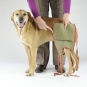 Dog diapers for large male dogs Set-of-3-3
