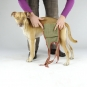 Dog diapers for small male dogs Set-of-3-3