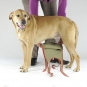 Dog diapers for large male dogs Set-of-3-4
