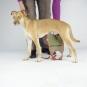 Dog diapers for small male dogs Set-of-3-4
