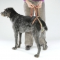 Dog diapers for large female dogs Set-of-9-5