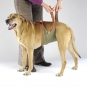 Dog diapers for large male dogs Set-of-3-6