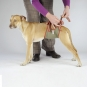 Dog diapers for small male dogs Set-of-3-6