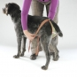 Dog diapers for large female dogs Set-of-6-6
