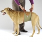 Dog diapers for large male dogs Set-of-6-7