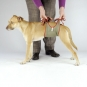 Dog diapers for small male dogs Set-of-6-7