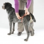 Dog diaper for large female dogs-7